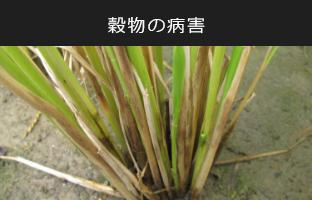 kokumotu-img